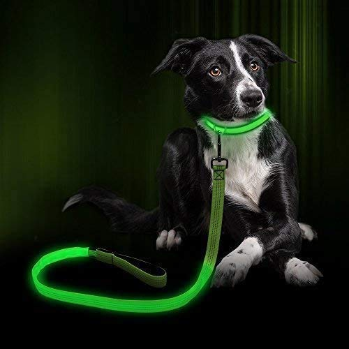 Clan_X USB Rechargeable LED Dog Leash