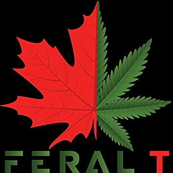 Feral T