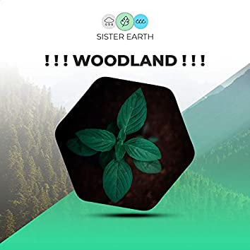! ! ! Woodland ! ! !