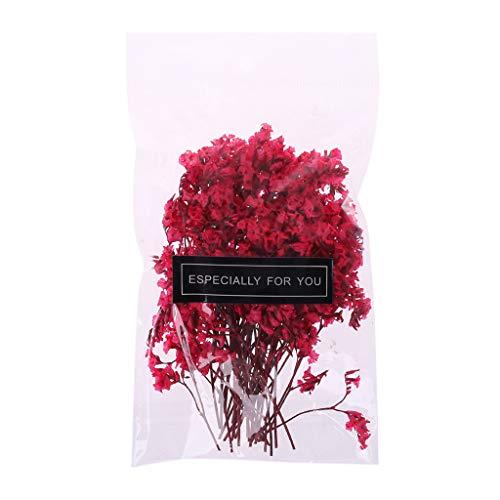 JOYKK 1 zakje echt gedrukt gedroogde bloemen planten verfraaien voor doe-het-zelf scrapbooking kaarten maken kunst handwerk decoratie