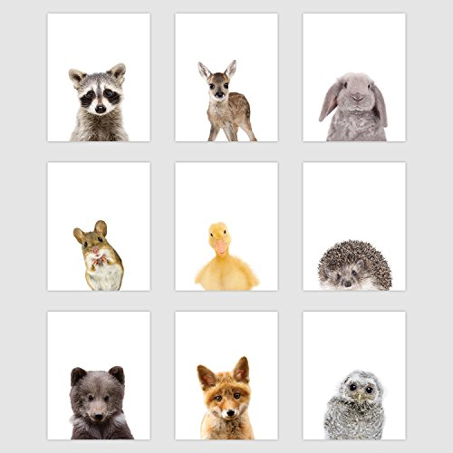 Set of 9 Woodland Animal Poster Prints - Cute Baby Forest Animal Wall Art - Nursery Room Decor (8  x 10   Unframed Paper Cardstock) Double Sided