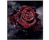 Blxecky DIY 5D Diamant Peinture Point De Croix Broderie Diamond Painting Kits Salon Chambre Décoration Autocollant Mural,Rose(12X12inch/30X30CM)