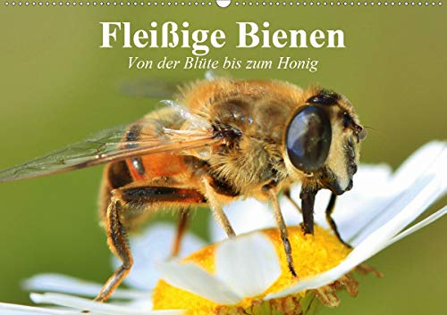 Fleißige Bienen. Von der Blüte bis zum Honig (Wandkalender 2021 DIN A2 quer)
