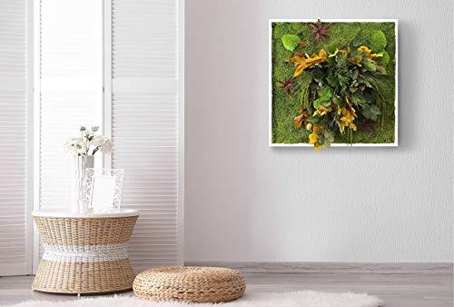 """""""L'affabile"""", Cuadro vegetal con musgo plano y plantas naturales estabilizadas, Moss Frame, sin manutención, Jungle Moss, jardín colgante estabilizado"""