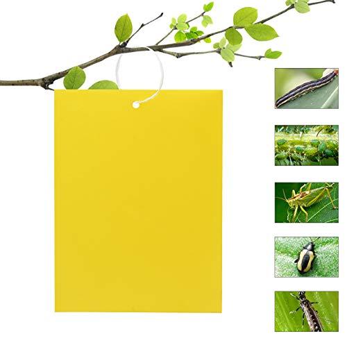 YancLife 50 trappole adesive per insetti su entrambi i lati, autoadesive, per mosche bianche, afidi, zanzare, funghi, tarme altri insetti, 15 cm x 20 cm