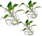 Ecosides - 3 macetas de pared para terrario, de vidrio transparente, para pared, maceta de pared, macetas colgantes para plantas suculentas, musgo, plantas de aire