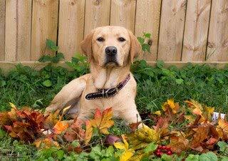 jzxjzx diamant schilderij gouden hond ventilator dierlijke vorm schattige woondecoratie accessoires volledige diamant mozaïek schilderij