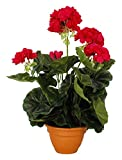 MICA Decorations 975226 - Flores, geranios Grandes, Color Rosa