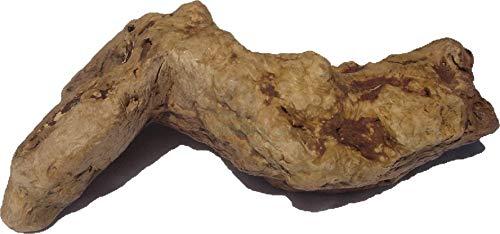 Torgas Kauwurzel (M ca 300g-500g)
