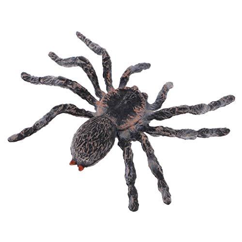 Zeagro Realistische Wissenschaft Kunststoff Tier Modell Figur Brasilianische weiße Spinne Figur Kinder Kinder Lernspielzeug Home Dekoration Sammlerstücke Kinder Geschichtenerzähler Requisiten 1 Stück