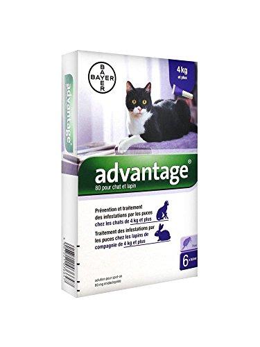 Bayer Advantage 80 Solution Antipuce Pour Chat et Lapin de 4kg et Plus 6 Pipettes
