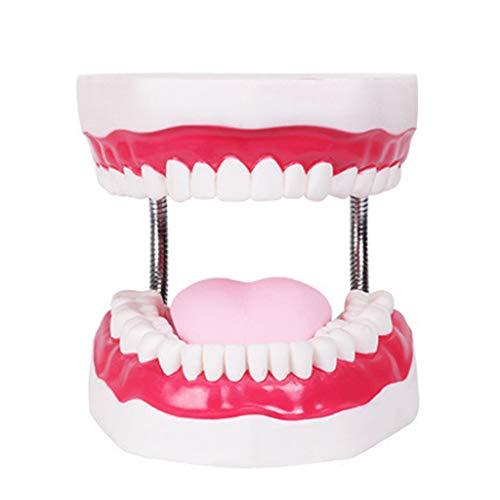 planuuik Modelo de cepillado dental y diente gigante de la enseñanza del estudio de cepillado de dientes modelo de herramientas