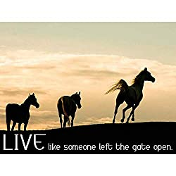 Live like someone left the gate open horse poster quote