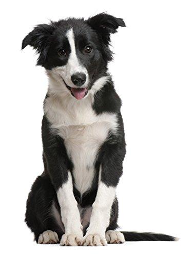 Effilierschere Fellschere Hundeschere Einseitig gezahnte Effilierschere Scheren aus Metall / Marke PRECORN - 4