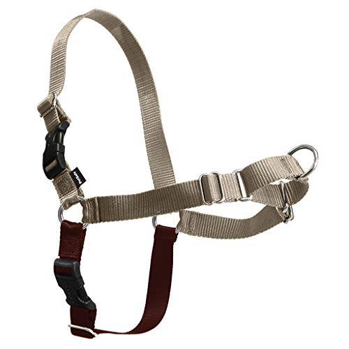 Which Is True About the Easy Walk Harness