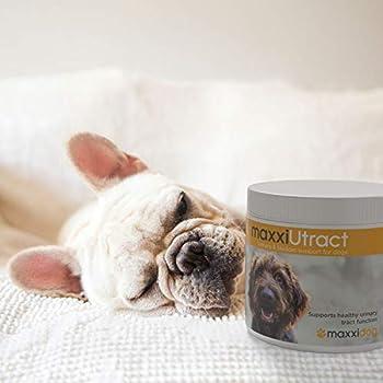 maxxidog – maxxiUtract Canneberge Complément Alimentaire Urinaire pour la Vessie des Chiens – Supplément Canin pour Le Contrôle de la Vessie et la Santé des Voies Urinaires (Poudre 150g)