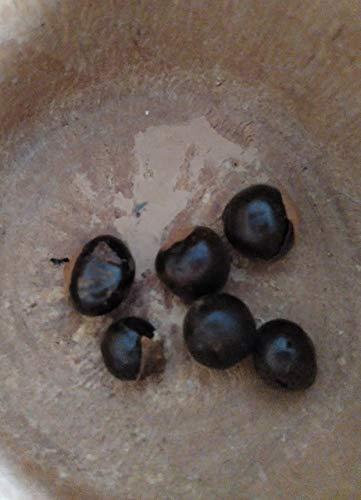 Guaraná Semilla 250 grs - La Paullinia cupana 250 grs - Energía Guaraná