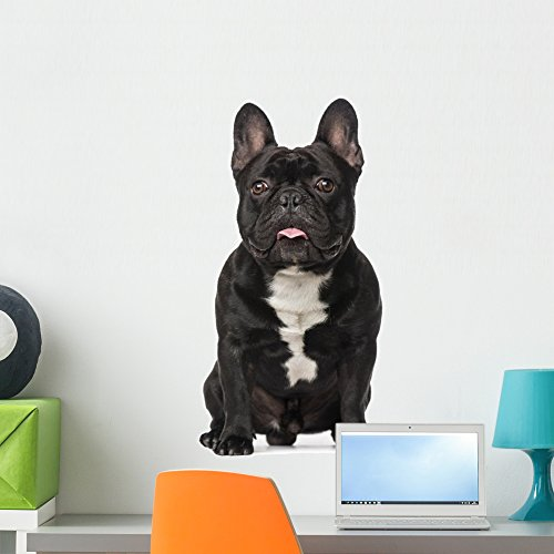 Wallmonkeys French Bulldog (2 Years Old) Wall Decal Peel and Stick Graphic WM143772 (24 in H x 20 in W)