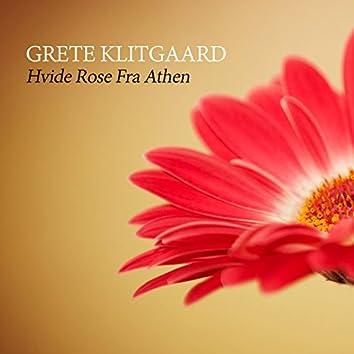 Hvide Rose Fra Athen