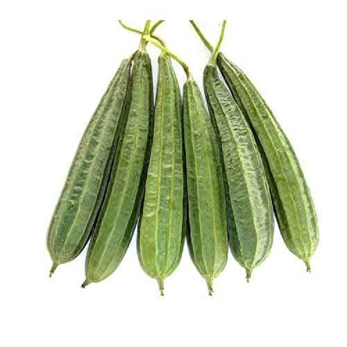 Kushuworld Vegetable Seeds : Ridge Gourd Seeds - Variety Jaipur Long For Terrace Garden in kitchen garden pack