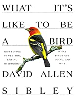 what it's like to be a bird: from flying to nesting, eating to singing - what birds are doing, and why