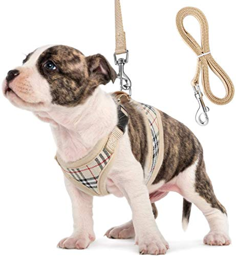 Small Dog Harness