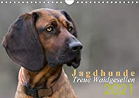 Jagdhunde - Treue Waidgesellen (Wandkalender 2021 DIN A4 quer): Jagdhundeportraits (Monatskalender, 14 Seiten )