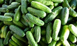 Cucumber Calypso F1 Hybrid Great Garden Vegetable Seeds by Seed Kingdom Bulk 1/4 LB Seeds