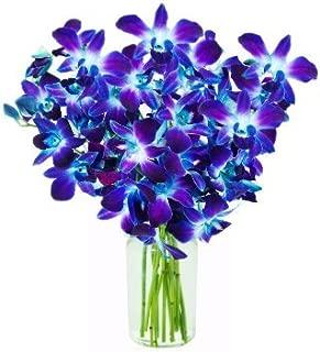 blue bom orchids