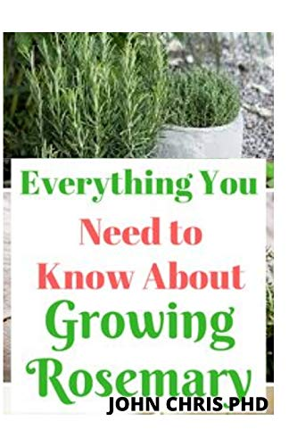 ROSEMARY: EVERYTHING YOU NEED TO KNOW ABOUT GROWING ROSEMARY