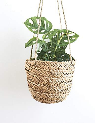 Maceta colgante de césped natural – hecha a mano para macetas de interior – para plantas...