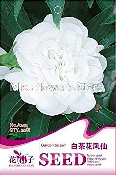 A243 White Garden Balsam 20 Graines Impatiens Balsamina Flower Garden