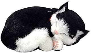 Best black and white shorthair cat Reviews
