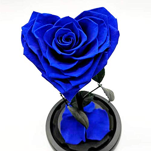 Heart Shaped Preserved Rose,Beauty and The Beast Real Eternal Rose in Glass Dome (Blue)