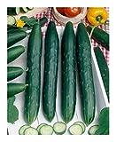 Premier Seeds Direct CUC09 Finest Early Spring Burpless F1 semi di cetriolo (confezione da 40)