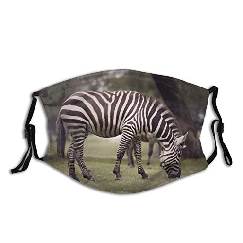 LUOWAN Wild Wildlife Wallpapers Creative Commons Purple Pictures Zebra Portrait Blackandwhite DustWashableReusableFilterandReusableMouthWarmWindproofCottonFace