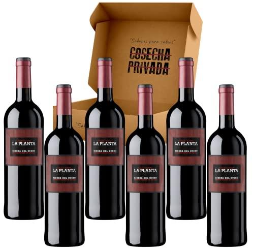 La Planta Vino - Envío Gratis 24H - Estucche 6 Botellas - Bodegas Arzuaga- Ribera del Duero - Vino Regalo - Seleccionado y Enviado por Cosecha Privada