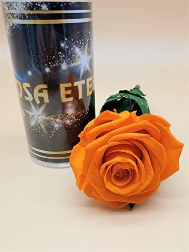 almaflor Rosa eterna preservada Naranja Premiun. Gratis ENVÍO. Rosa preservada eterna Naranja con Cabeza Premiun. Tubo de conservación de 55 cm. Fabricado en España.