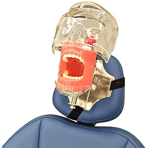 JYKCBP Modelo De Cabeza Fantasma Dental, Simulador De Cabeza Fantasma De Maniquí con Montaje En Banco En Sillón Dental, Maniquíes Dentales para Entrenamiento Educativo Denist