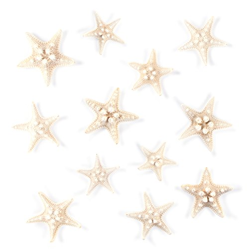 Starfish Natural Knobby Mini Beach Sea Stars for Wedding Seashell Crafts (Small, 12 Piece) by Super Z Outlet