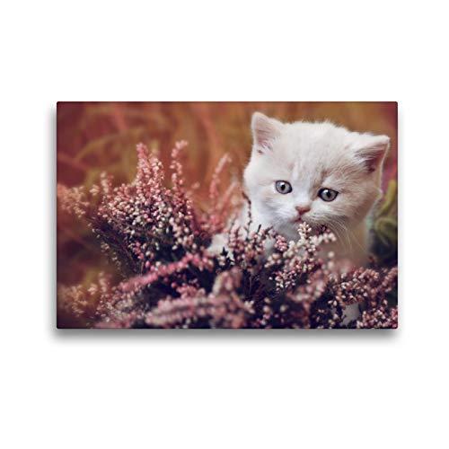 CALVENDO Premium Textil-Leinwand 45 x 30 cm Quer-Format BKH Katzenkind Creme-White, Leinwanddruck von Janina Bürger