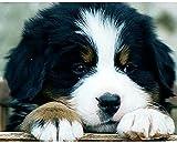 FJKEFJH Kits de Punto de Cruz Contado,cachorro 40X50cm 14CT Conjunto de Kit de Punto de Cruz de Bordado DIY Tela a Mano Hilos de Color Dibujo de Aguja de paño de algodón