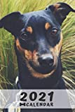 Manchester Terrier Calendar 2021: Perfect for Notes and Planning, Monthly and Weekly (2021 Planner, Diary)