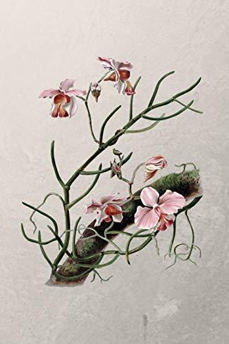 Meine Orchideensammlung: Liste Sammlung für deine Orchideen | Journal  Notebook Sammlerbuch  für Orchideenliebhaber Orchideensammler oder Orchideenkenner