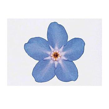 Best forgetmenot flower tattoos Reviews