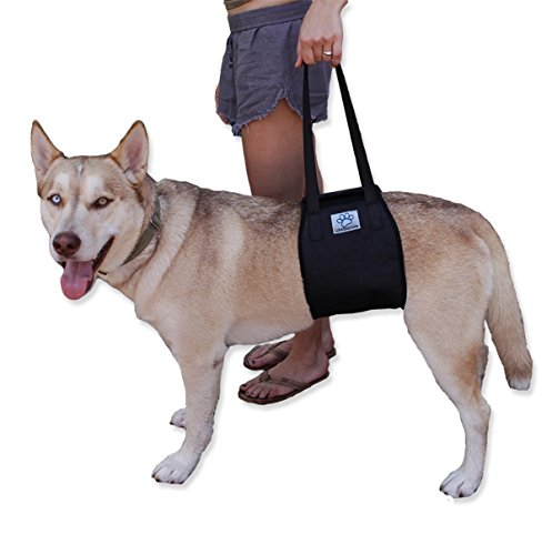 Dog Lift (X-Large, Black)