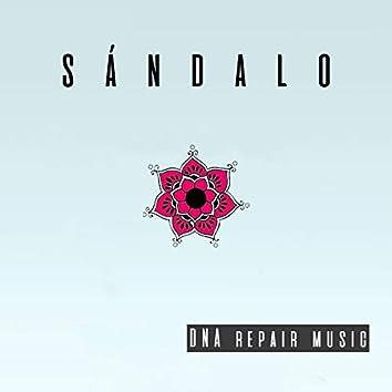 Dna Repair Music
