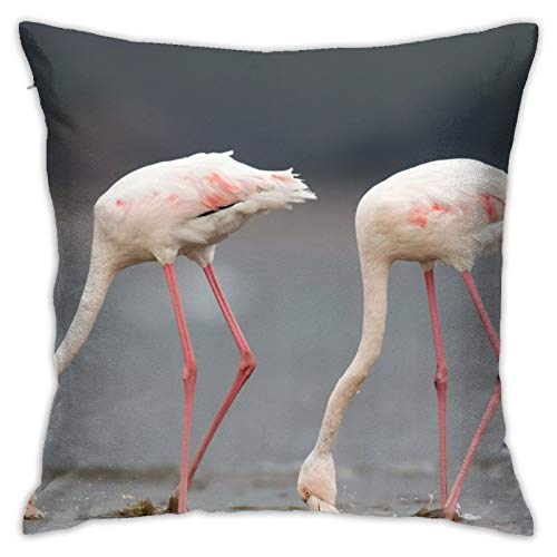 Greeter - Funda de almohada decorativa para el hogar, diseño de pájaros de flamencos, para regalo de casa, sofá, cama, coche, 45,7 x 45,7 cm