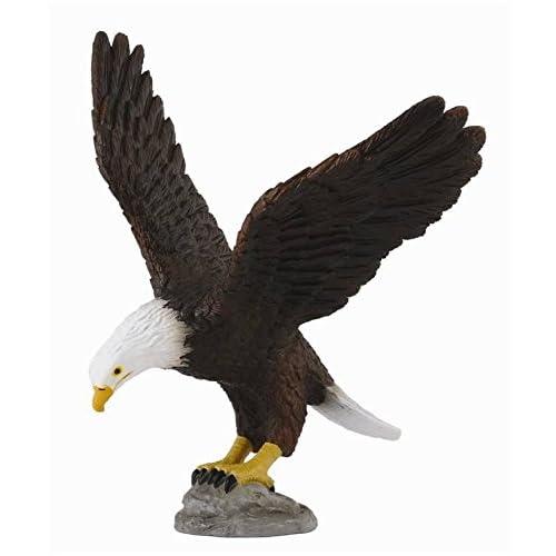 Aquila Collecta cod. 88383
