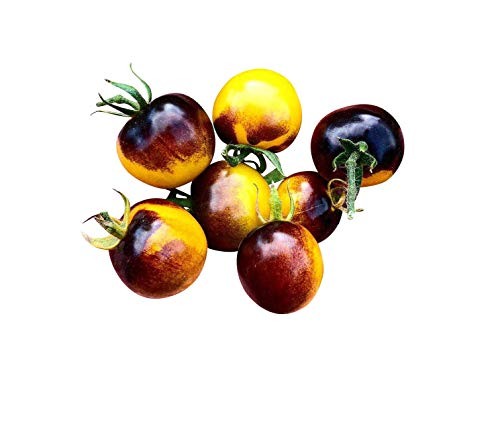 Tomate -Antho Yellow- 10 graines -Super Tasty & Sweet- * Très Sain *